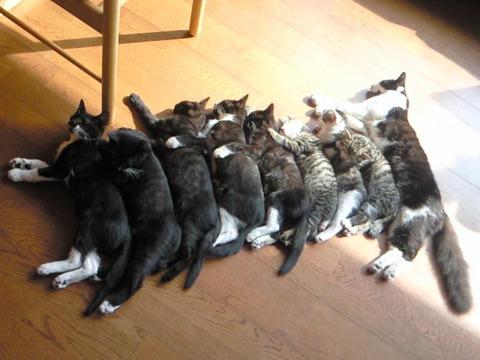 多頭飼い01_猫ねこch