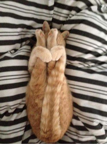 寝方09_猫ねこch