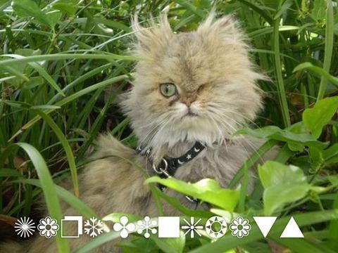 ぬこ13_猫ねこch