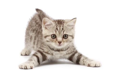 子猫拾った_猫ねこch