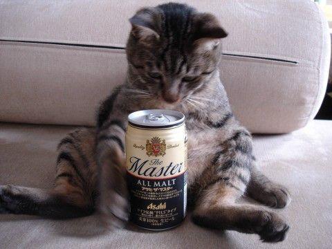 ビール03_猫ねこch