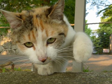 野良猫14_猫ねこch