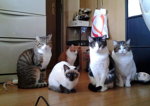 猫好き2_猫ねこch