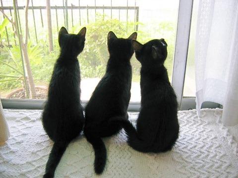 黒猫_猫ねこch