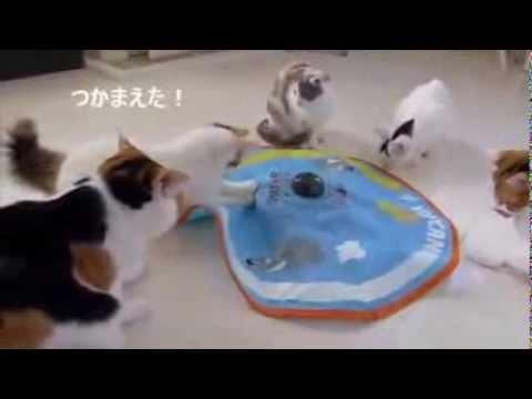 遊ぶ猫_猫ねこch