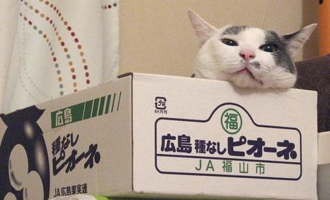 箱14_猫ねこch
