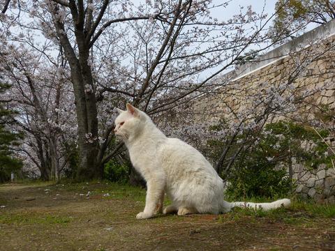 春6_猫ねこch