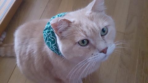 泥棒猫1_猫ねこch