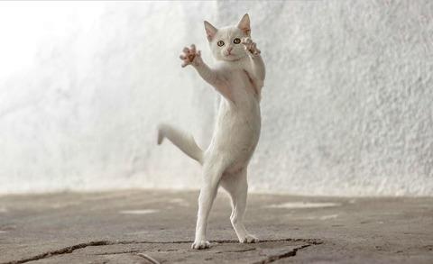 猫やくざ03_猫ねこch