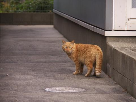 二度見_猫ねこch