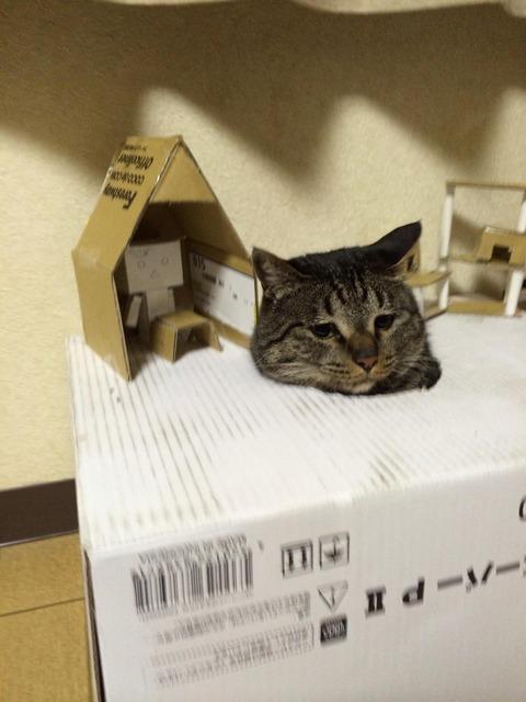 箱23_猫ねこch
