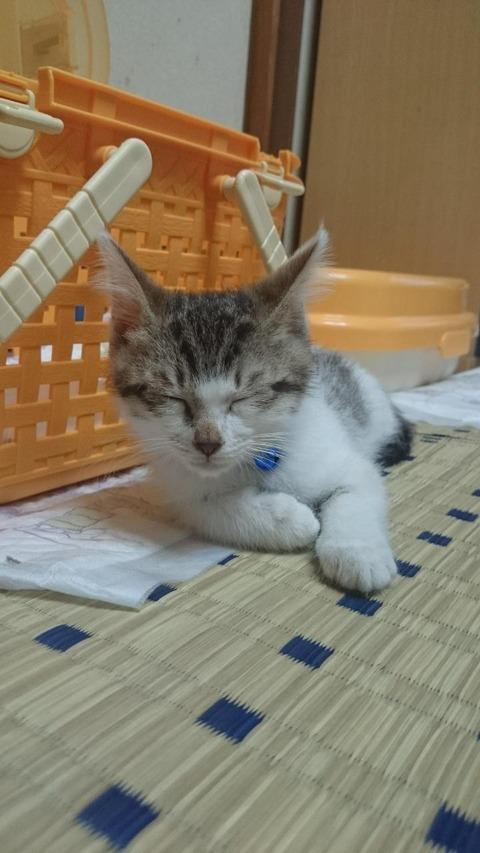ミケ04_猫ねこch