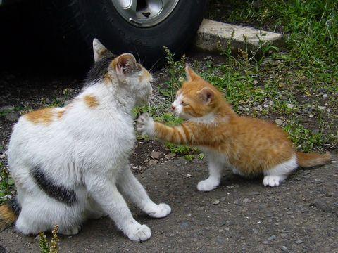 猫_喧嘩1_猫ねこch