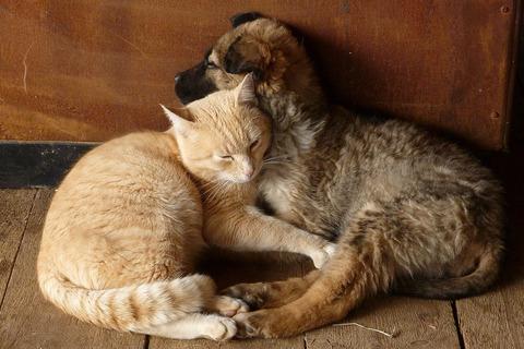 寝床01_猫ねこch