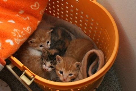 猫_赤ちゃん_トイレ_猫ねこch