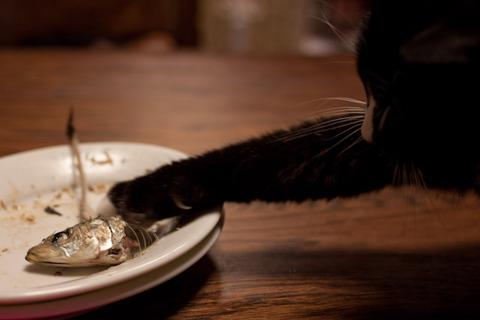飼い猫あるある_猫ねこch