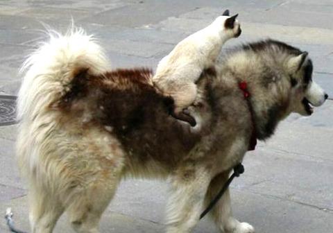 犬猫_猫ねこch