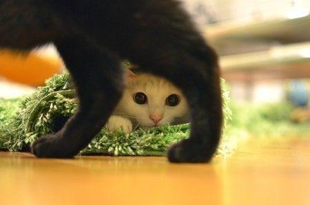 かくれんぼ_猫ねこch