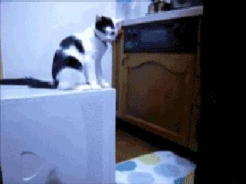勘違い_猫パンチ02_猫ねこch