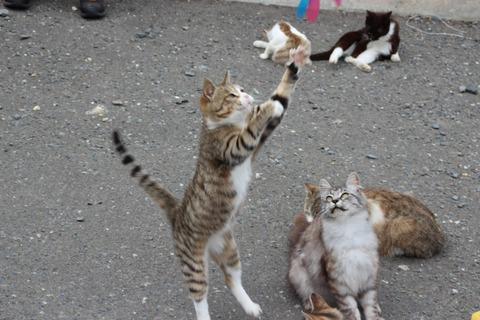 猫島_石巻25_猫ねこch