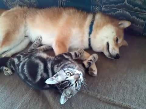 ふたりは仲良しにゃんこ&わんこ_猫ねこch