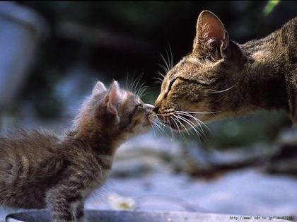子猫_母猫2_猫ねこch