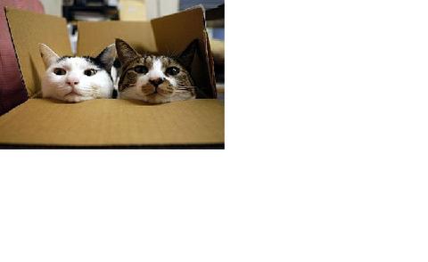 箱08_猫ねこch