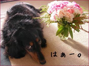 20070924_02