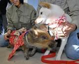 犬から猪へ、干支の引継ぎ式