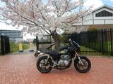 200405桜と1号機 (1)