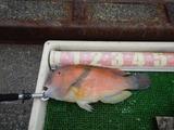 自粛解除の魚釣り (2)