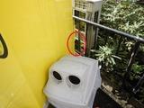 足長バチの巣発見 (1)
