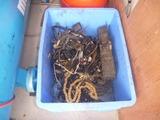 ゴミに見えないゴミ (2)