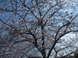 5年目の春