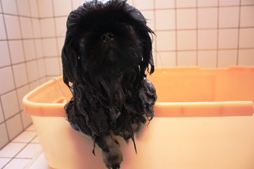 ling shampoo2