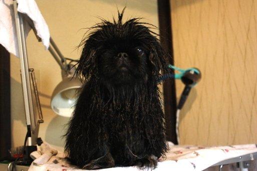 ling shampoo3