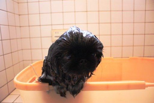 ling shampoo1