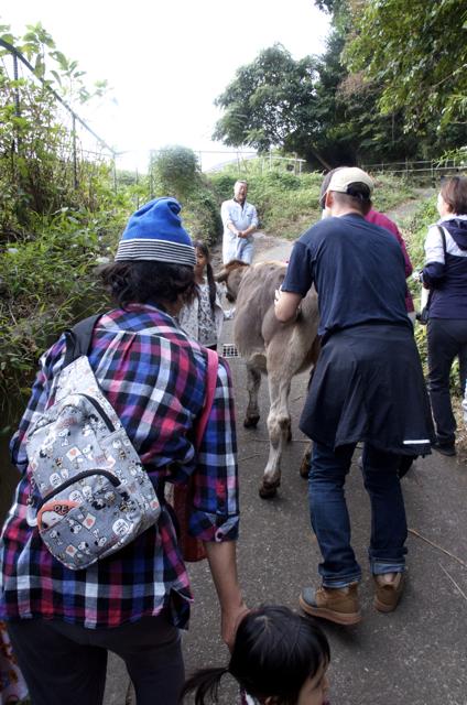 仔牛の散歩
