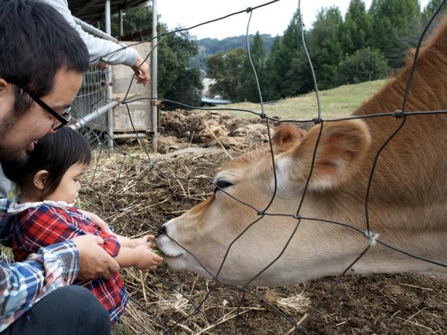 牛に葉っぱ