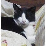 戯言なる猫