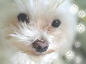 愛犬*スカーリー