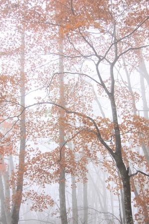 霧に包まれ