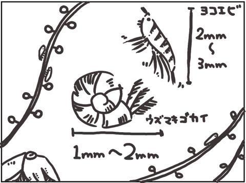 リフジウムの微生物