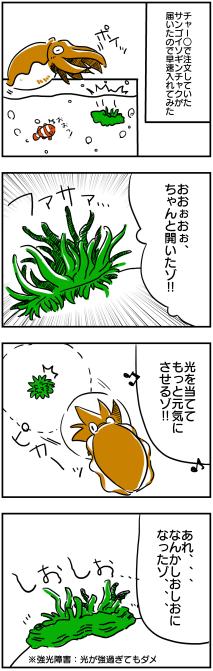 イソギンチャク飼育①