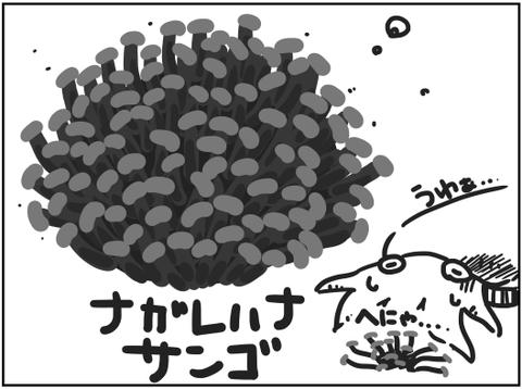 ナガレハナサンゴの復調