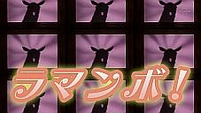 『しろくまカフェ』第31話…ペンギンさんペン子さん恋の結末!? ヤマアラシがジャニーズ過ぎわろたwww