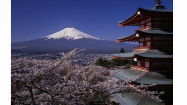 忍野でも桜!