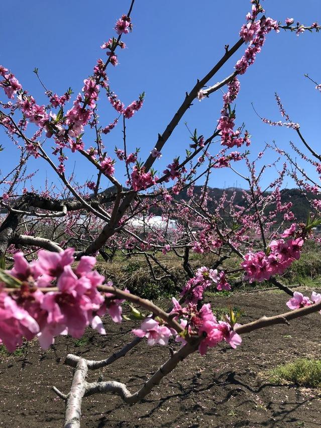 春の花々(^^♪