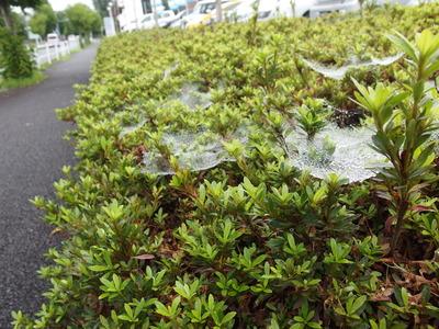 蜘蛛の巣と雨滴