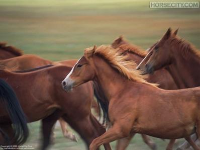 SS501-sd95s-yuri-horses_800